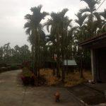 El entorno de la casa en Pingtung